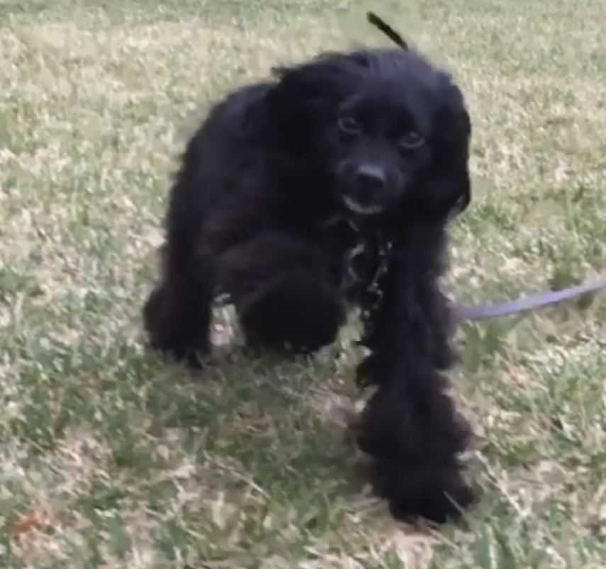 Dog Training Gaithersburg