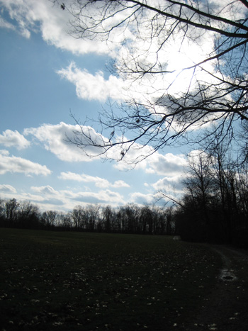 trees & bright sky at virginia kendall