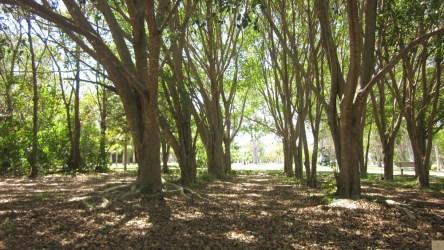 Dog Park grove