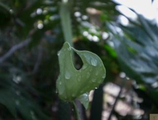 MD Leaf