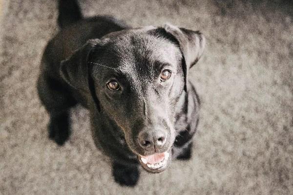 flummisdiary-happy-dog-hund-dogblog