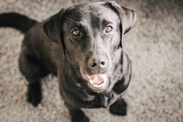 happy-dog-flummisdiary-hund