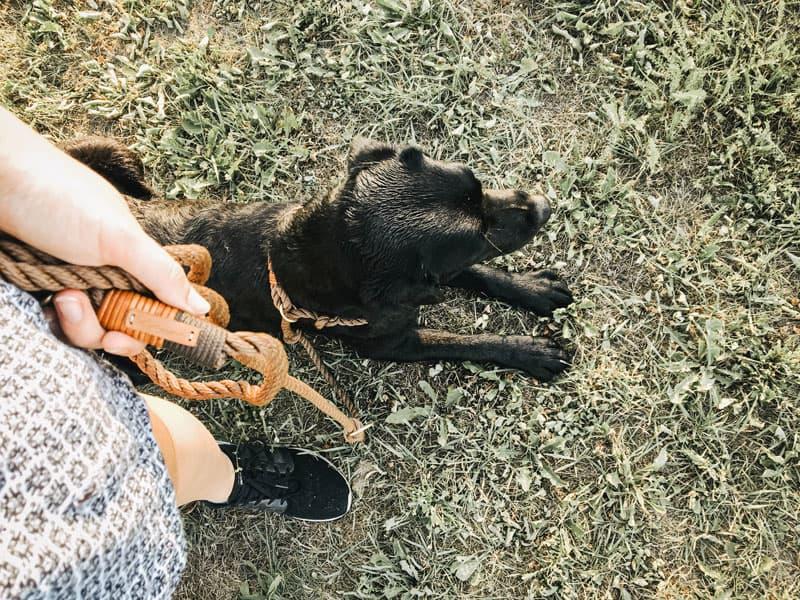 flummi-hundeschule-erste-stunde-lernen-hund