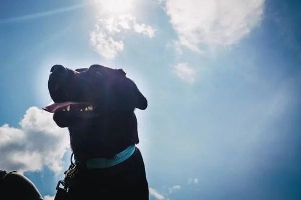 giftige-lebensmittel-für-hunde