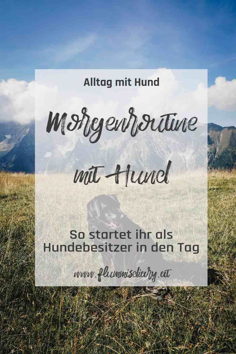pinterest-morgen-routine-hund-