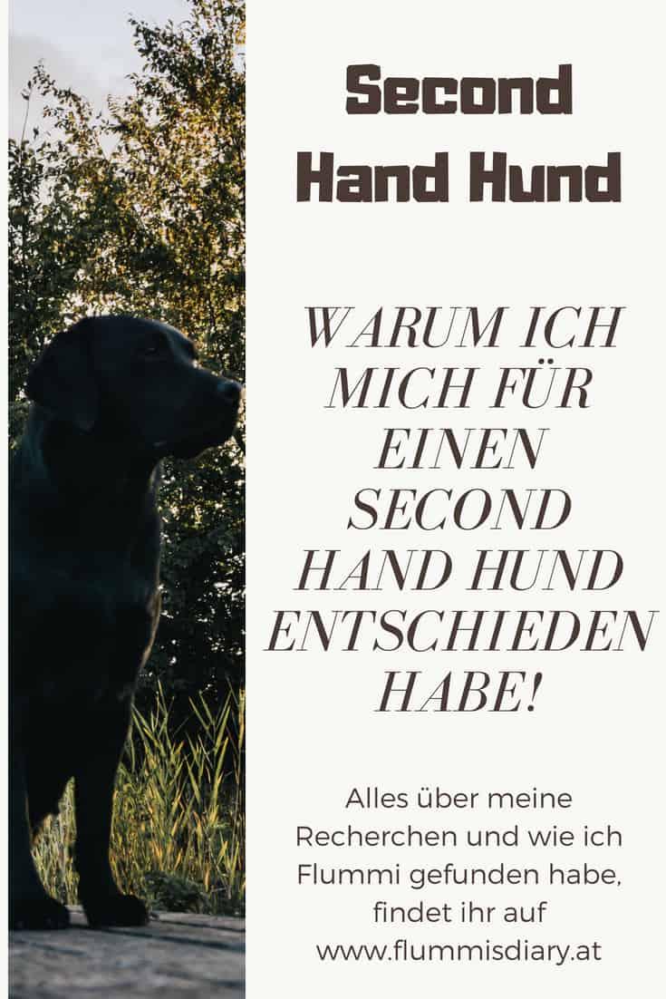 Second-hand-hund-infografik