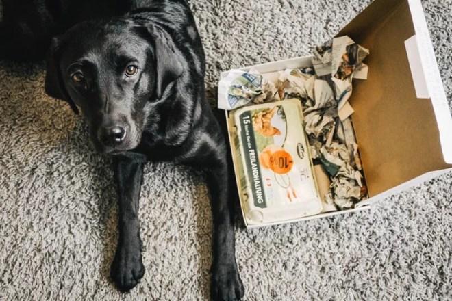 hundespielzeug-aus-eierkarton-flummisdiary