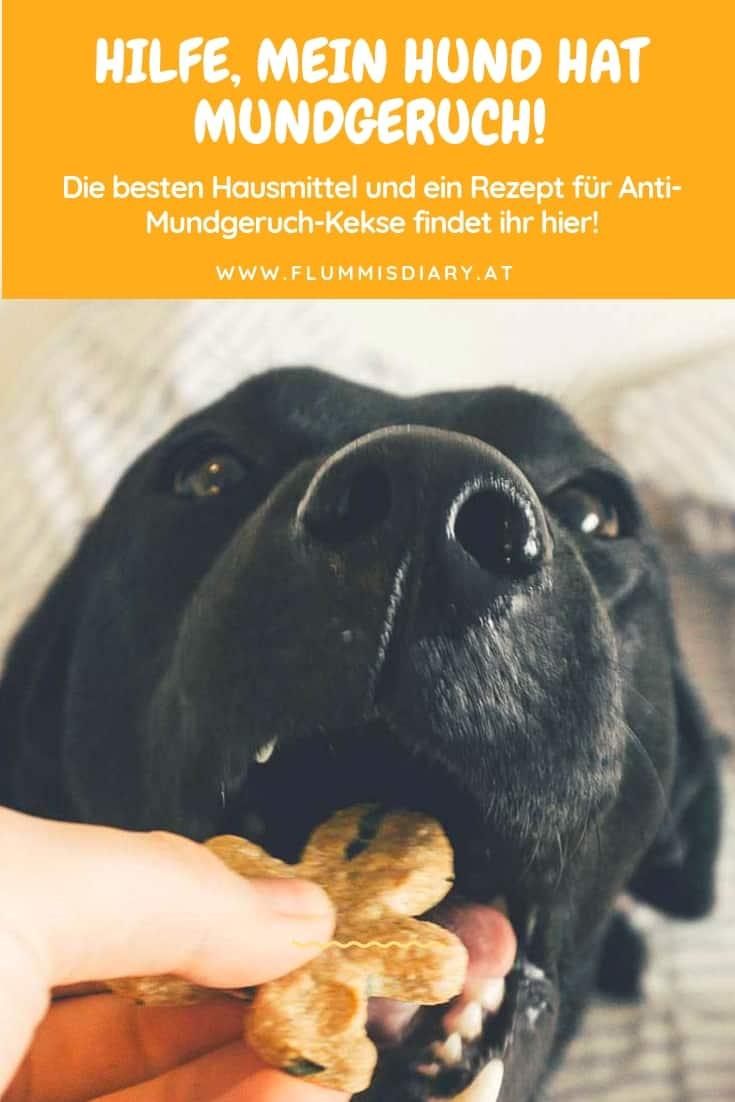 mein-hund-hat-mundgeruch