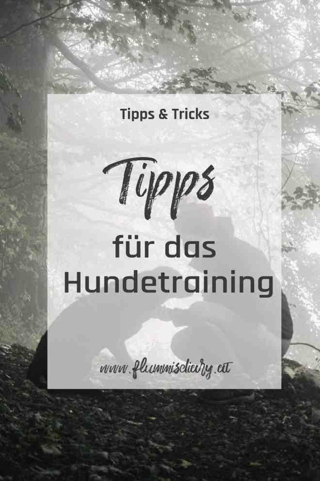tipps-fuer-das-hundetraining