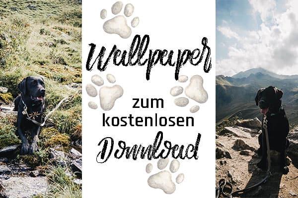 hunde-wallpapers-titelbild