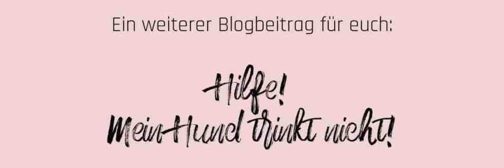 banner-hund-trinkt-nicht