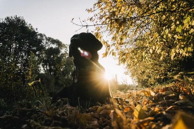 leinenführigkeit-beim-hund