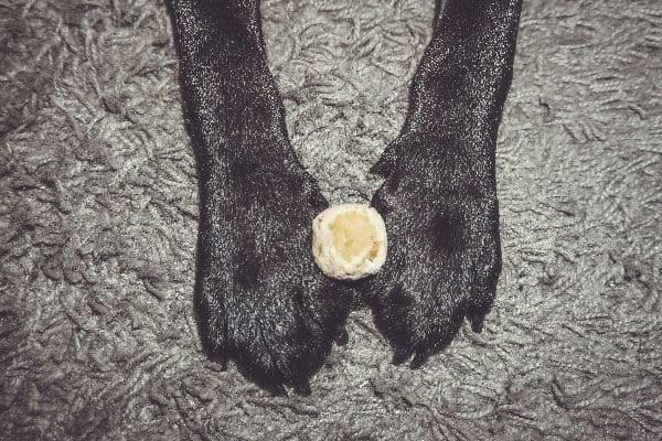 flummi-hund-propolis-baellchen-rezept