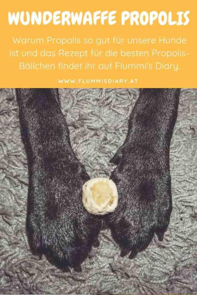 hundeblog-wunderwaffe-propolis