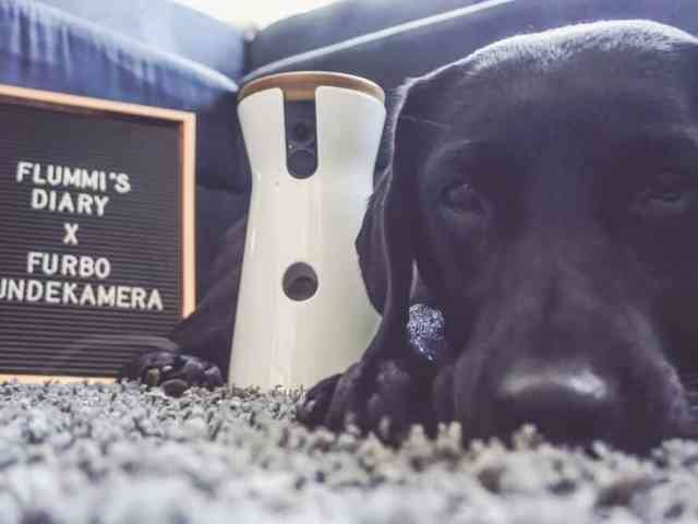 hundeblogger-produkttest-flummisdiary-furbo