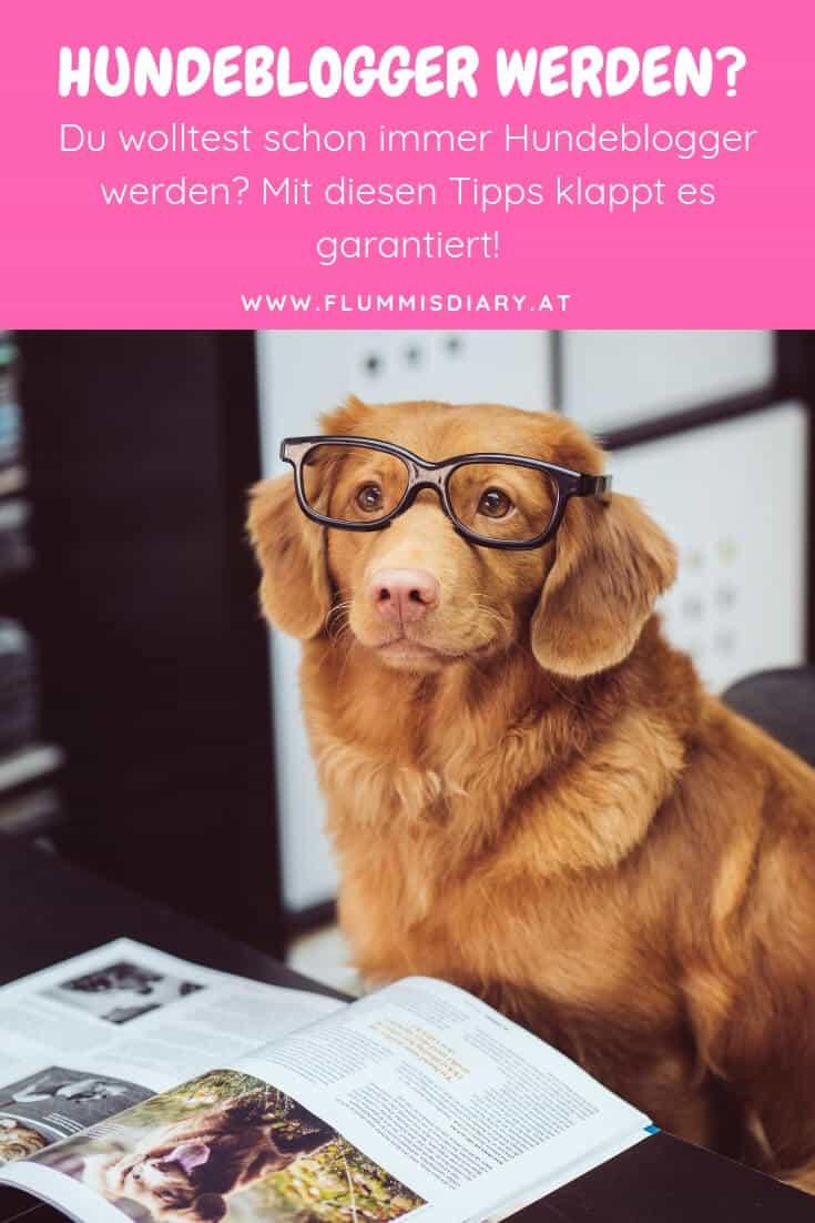 hunde-blogger-werden