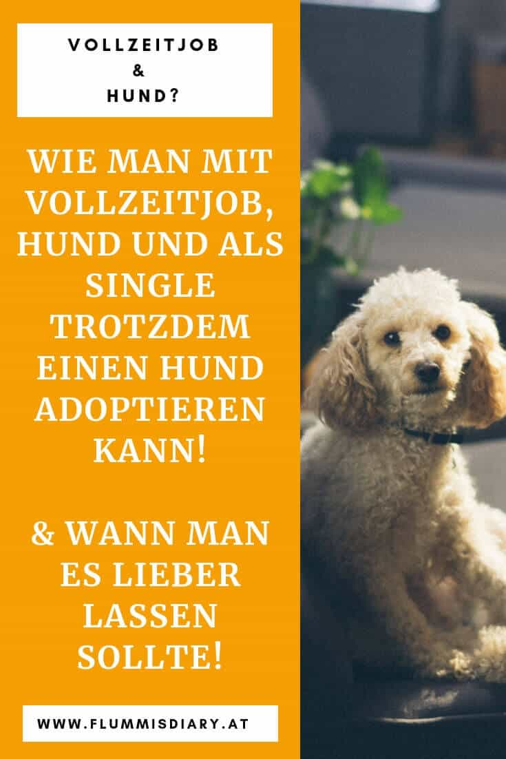 vollzeitjob-und-hund-allein-hundeblogger