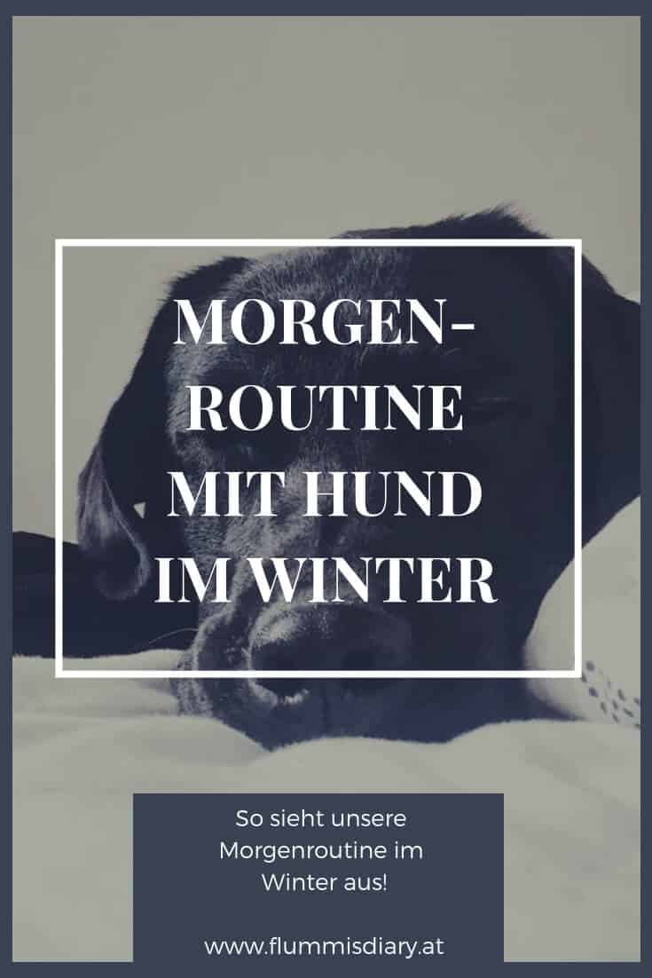 winter-routine-hund