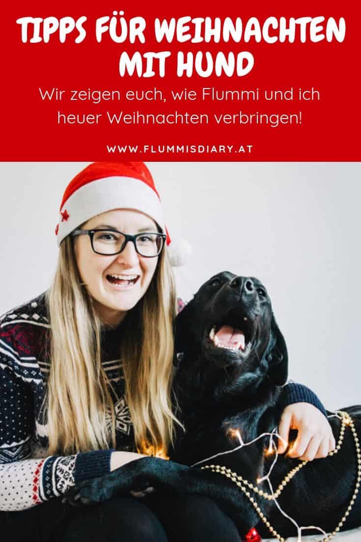 weihnachten-mit-hund-tipps-2