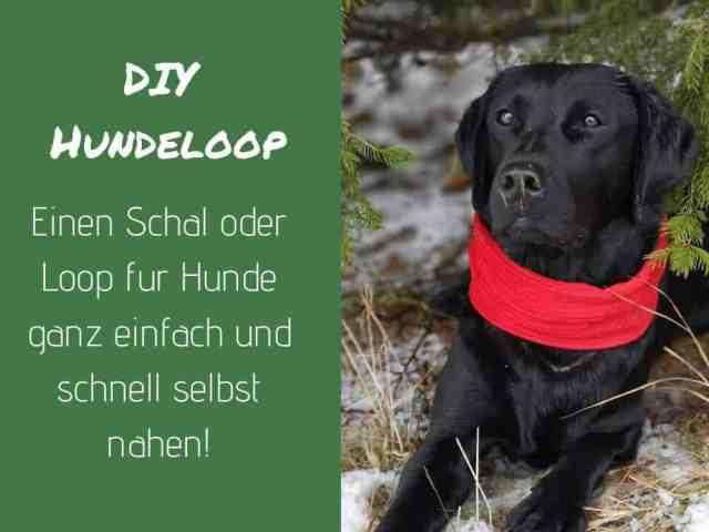 loop-schal-hund-hundeschal-diy