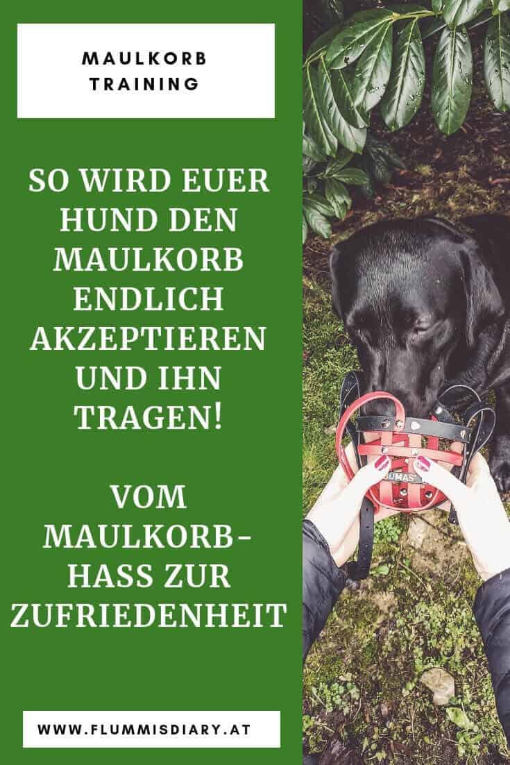 maulkorb-hunde-training-gewöhnen