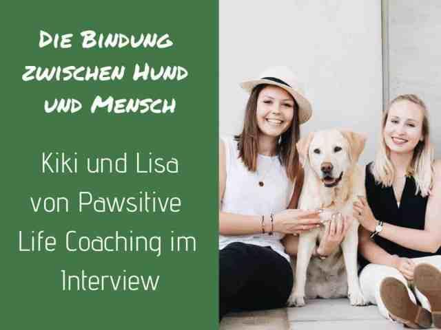 bindung-hund-pawsitive-life