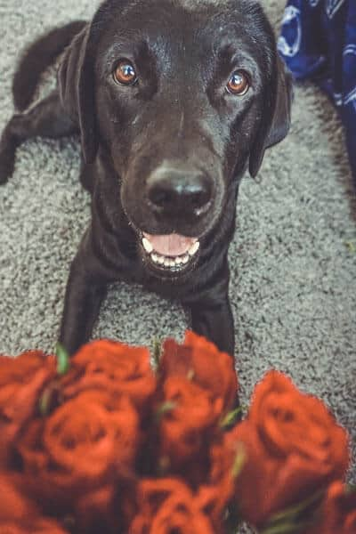 hunde-liebe-blog-bindung
