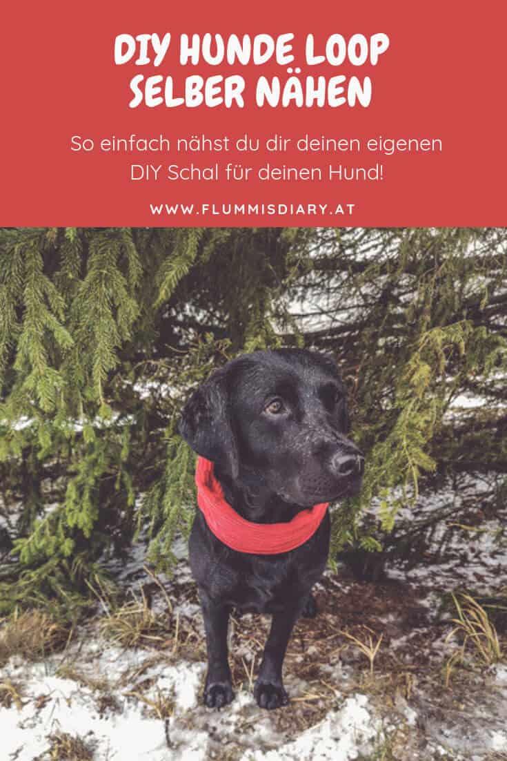 hunde-loop-selbst-geamacht-diy