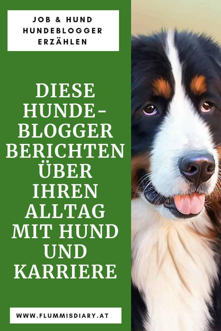 hundeblogger-vollzeitjob-hund-bericht