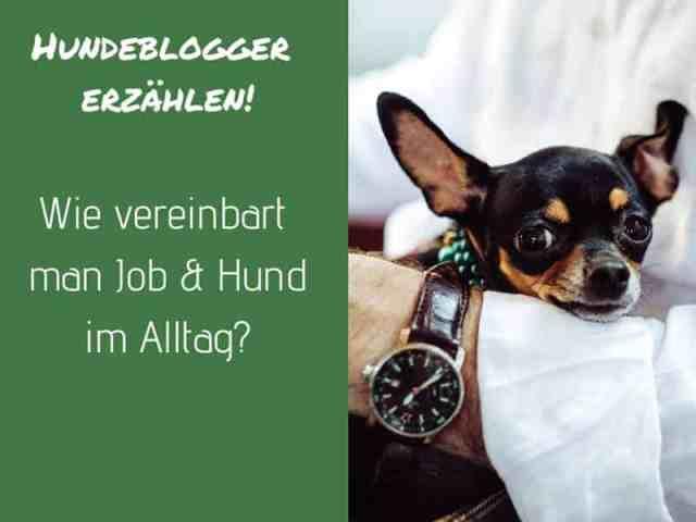 job-hund-alltag-vollzeitjob