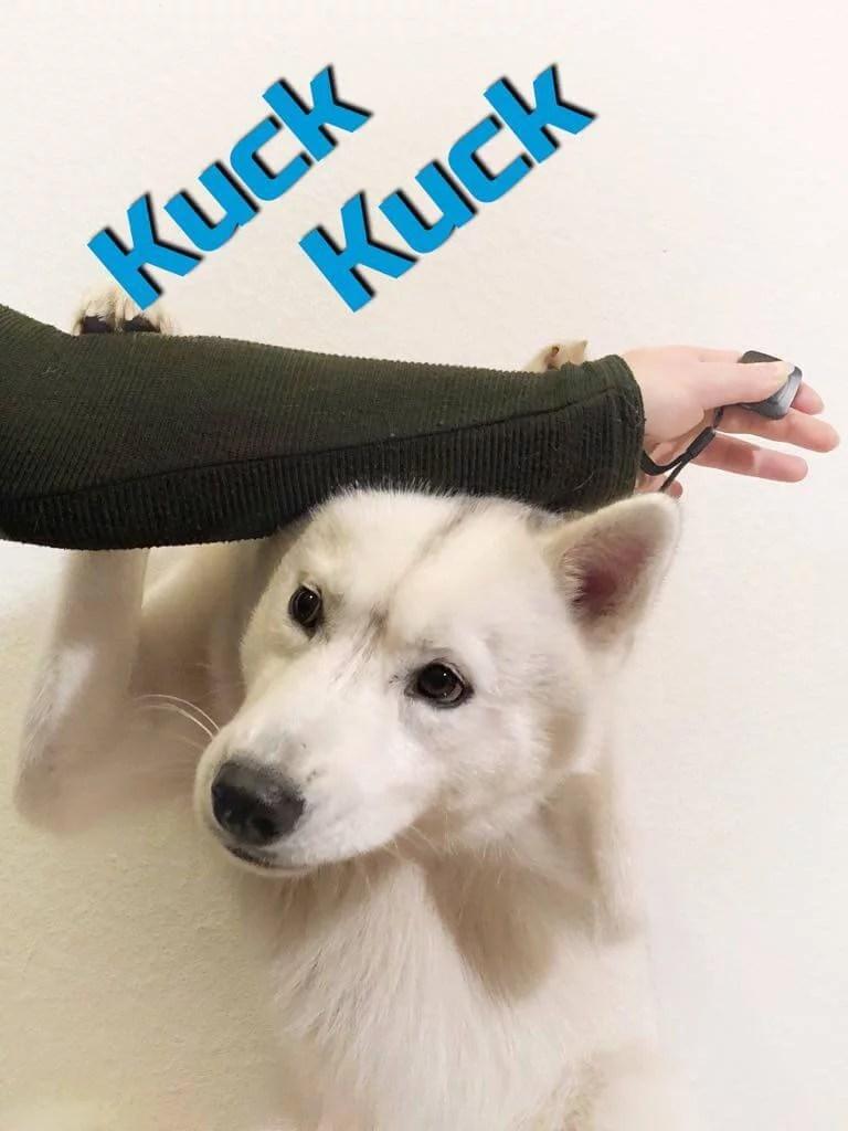 kuck-kuck-hunde-auslastung-tricks-hund