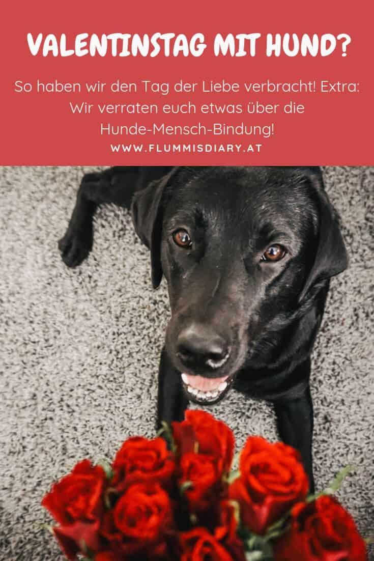 valentinstag-mit-hund