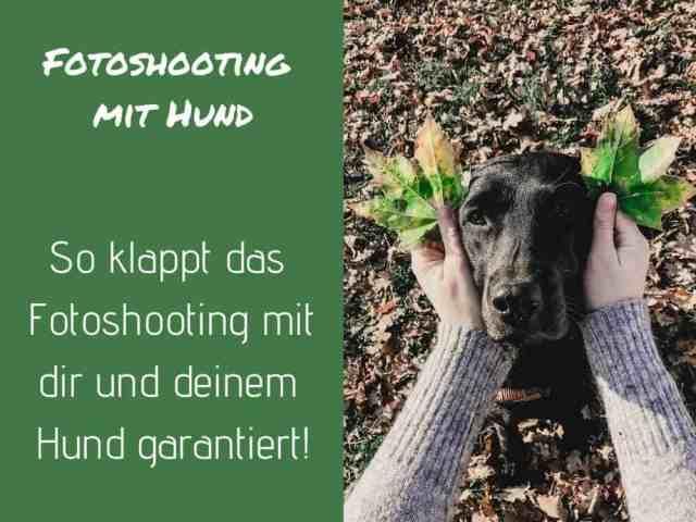 foto-machen-hund-tipps