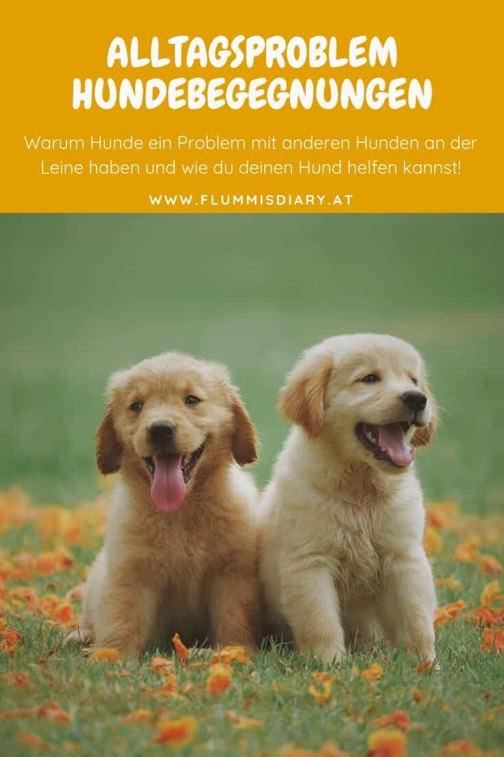 hunde-begegnungen-leine-problem