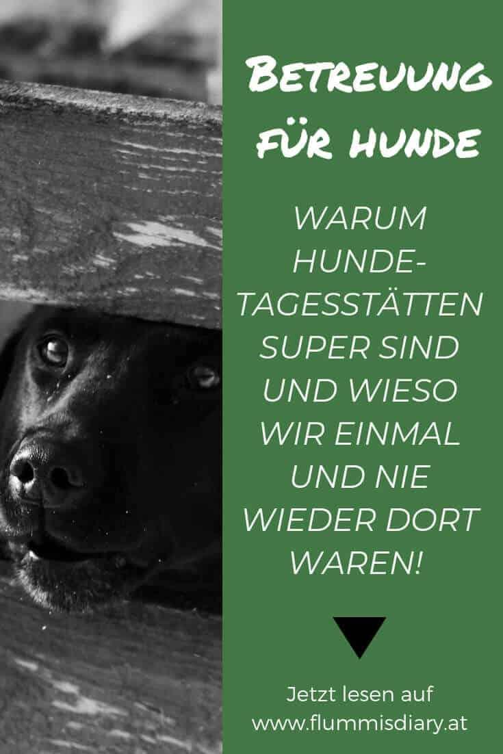 hunde-tagesstaette-betreuung-dogsitter