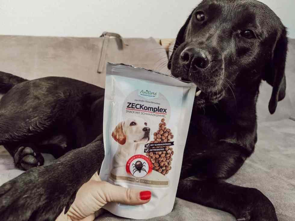 hunde-zecken-schutz-