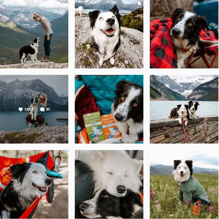 5280coloradodogs-inspiration-instagram-adventuredogs.png