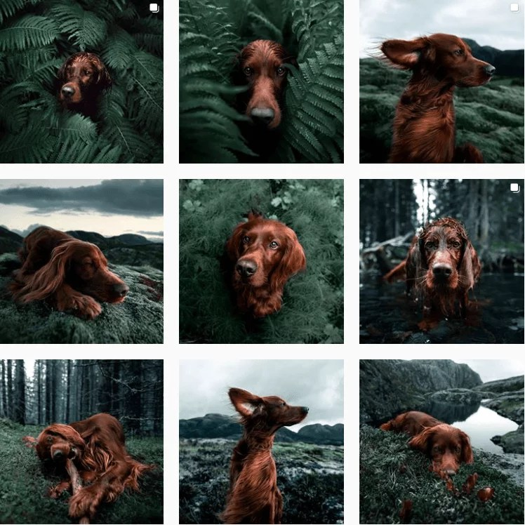 georgeandtroja-inspiration-instagram-adventuredogs.png