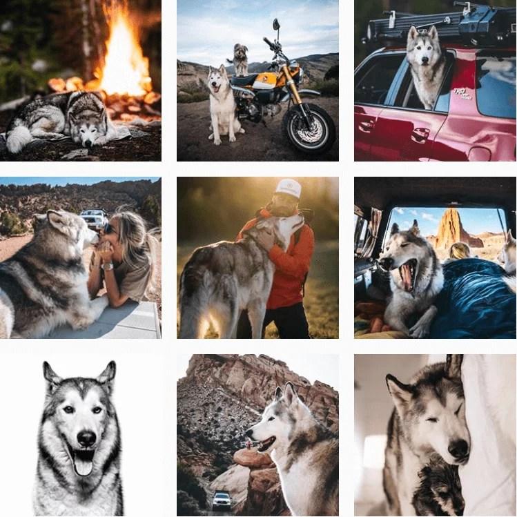 loki-inspiration-instagram-adventuredogs