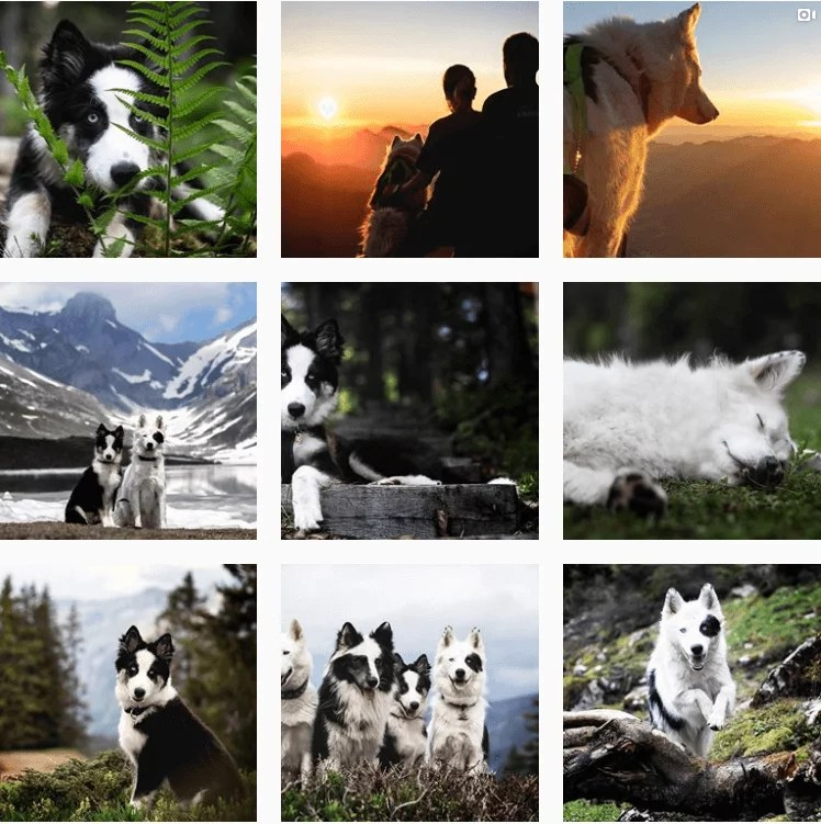 swiss.adventurelove-inspiration-instagram-adventuredogs.png