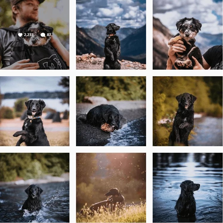 thegoodmutt-inspiration-instagram-adventuredogs.png