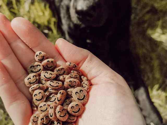 veganer-hund-vegan-ernährung-futter