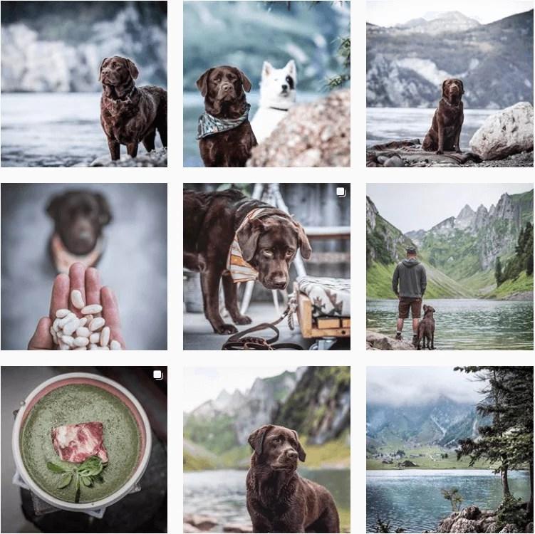 wanderrutediary-inspiration-instagram-adventuredogs.png