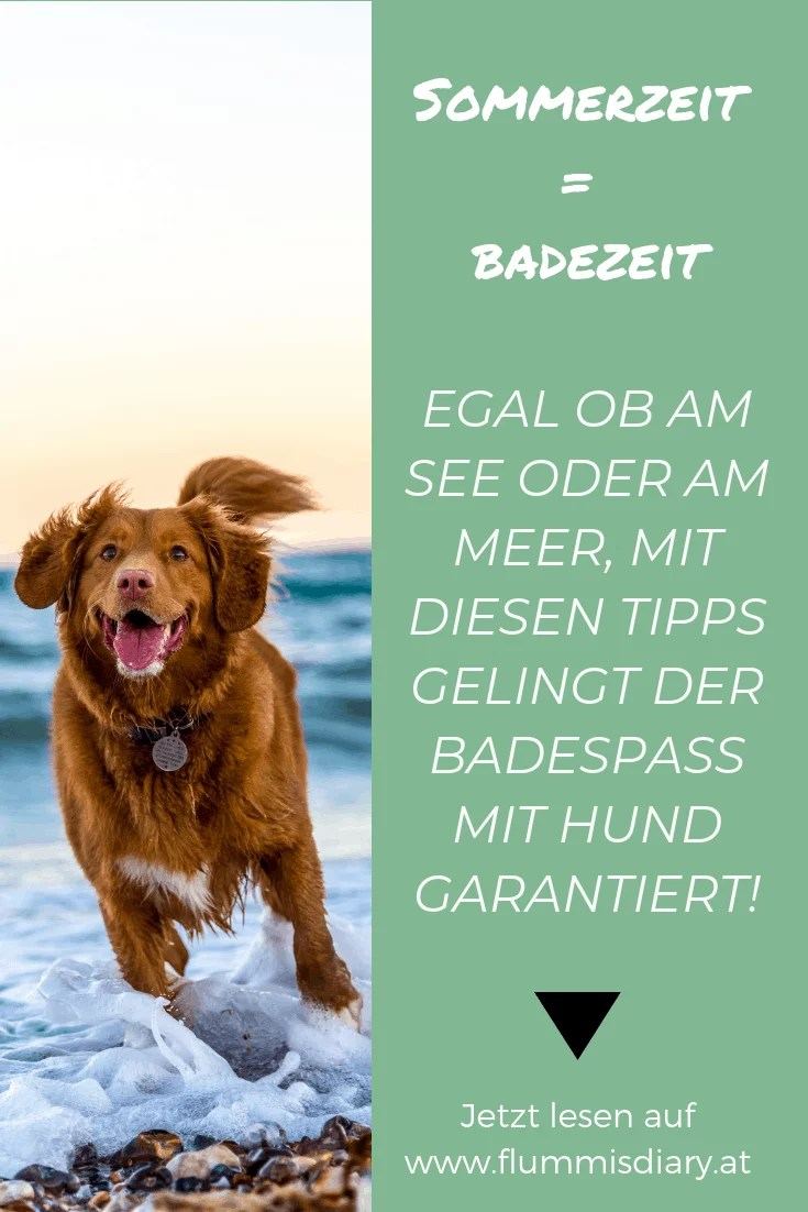 baden-mit-hund-meer-see-tipps-schwimmen-hunde