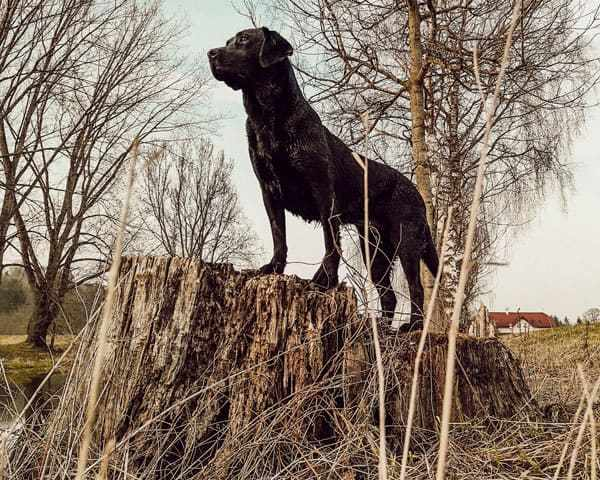 anti-jagd-training-hund-training-plan