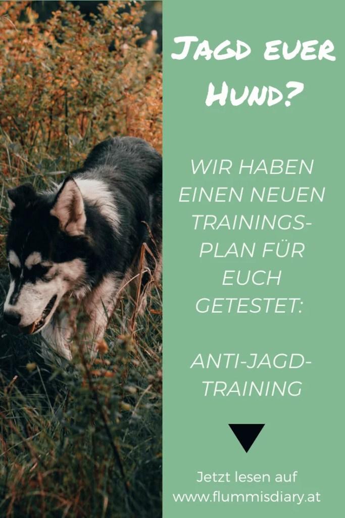 jagd-hund-training-tipps-jagen
