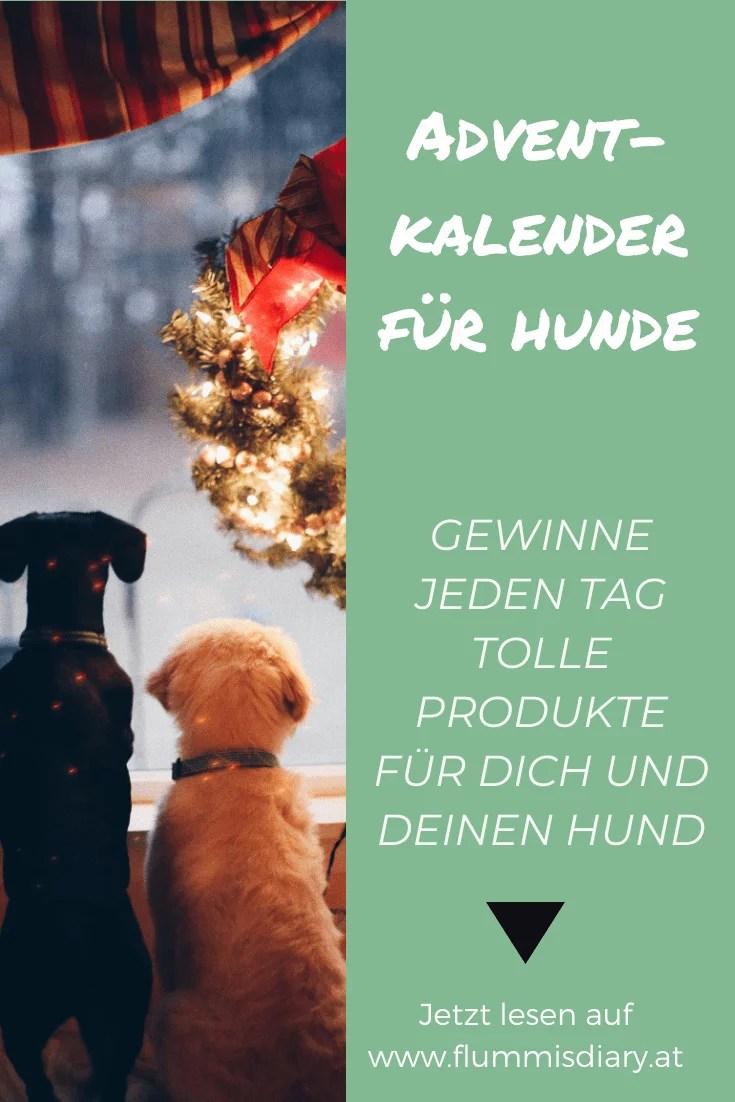 adventkalender-hund-gewinnspiel-blog-dog
