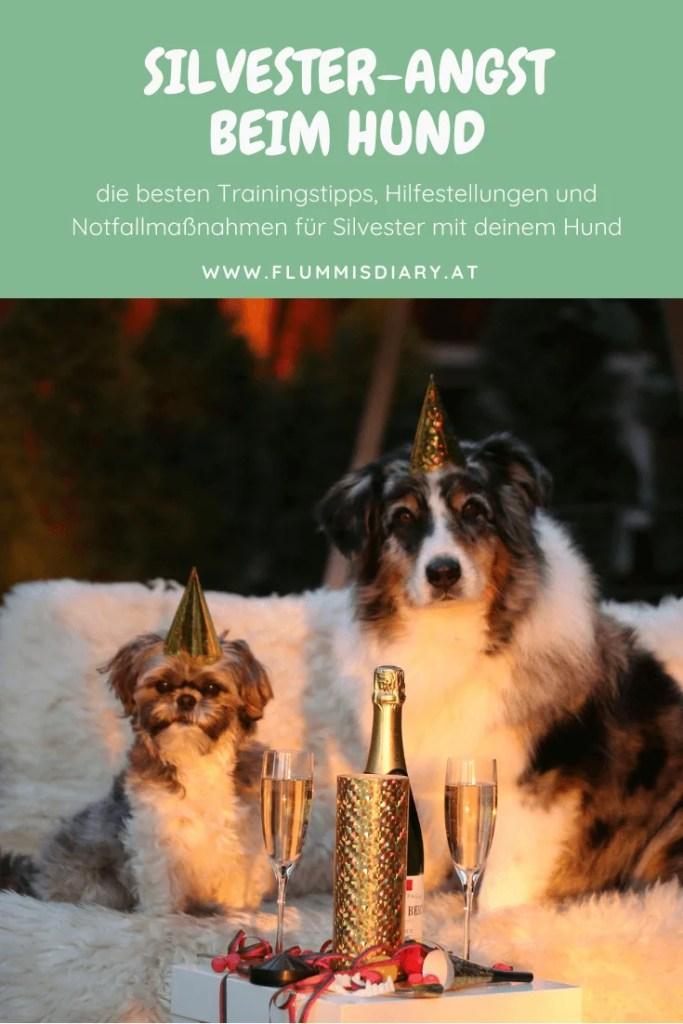silvester-hund-angst-training-entspannt-tipp