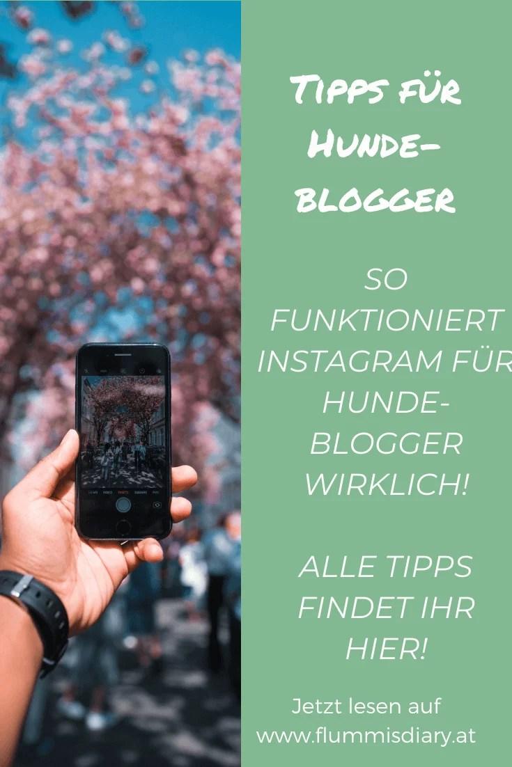 instagram-tipps-hunde-blogger-erfolg