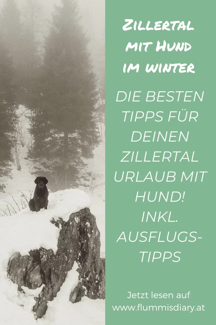 zillertal-mit-hund-im-winter-tipps-rodeln-wandern